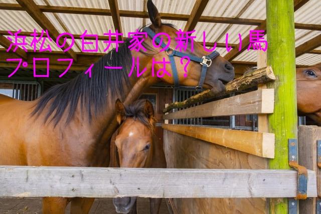 白井家の新しい馬